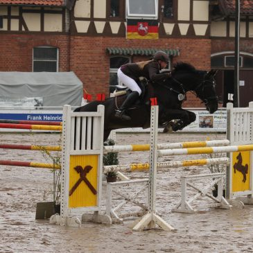 Drei Tage Reitsport pur in Westercelle